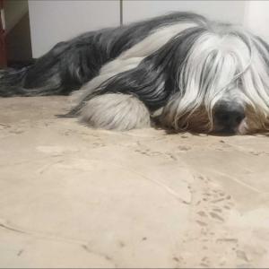 飽きた犬。