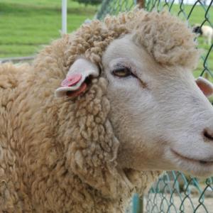 編み物苦手なんだけどやりたいんです。