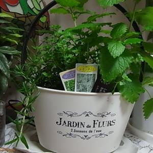 狭いながらも楽しい我が家  植物を愛でる心を大切に