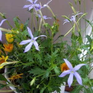 スリムな生活を心掛けよう   落ち込んでいる時はお花に癒されます