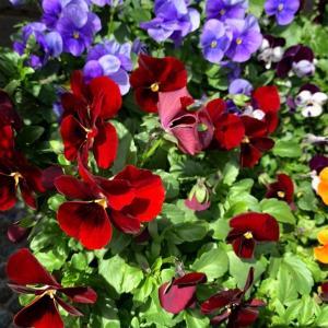 散りゆく花の最期の美しさ