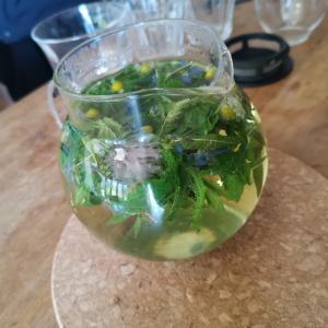 ハーブの可能性 Possibility of herbs
