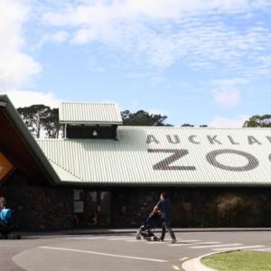 オークランド動物園に行ってみた【NZ観光】