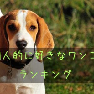 個人的に好きな犬種ランキング5選