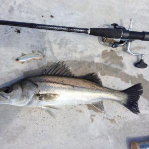 シーバス釣りで絶対に狙うべき定番ポイント紹介!