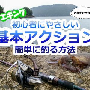 【エギング】初心者にやさしい基本アクション解説【簡単に釣る方法】