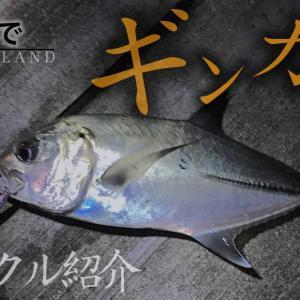 【激闘】離島ショアからギンガメアジ56cmを釣った。タックルを紹介
