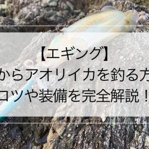 【エギング】磯からアオリイカを釣る方法【コツや装備を完全解説!】