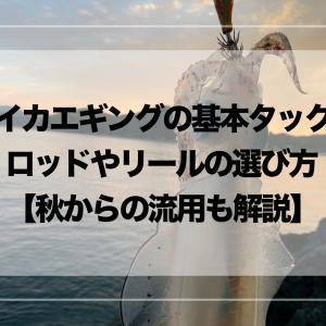 【春イカエギングの基本タックル】ロッドやリールの選び方【秋からの流用も解説】