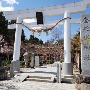 金蛇水神社の桜2021(宮城県岩沼市)