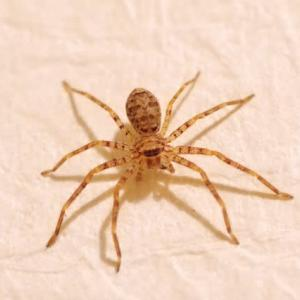 蜘蛛が多い
