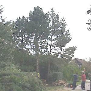 庭の木を倒す