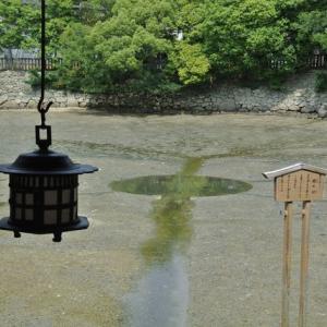 「花  (慈16) 」(oji3のブログ61)