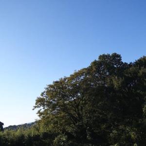 「これ何? 自然界 」(oji3のブログ192:慈123)