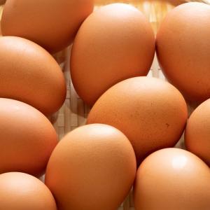 朝食で食べる一人2個分の卵焼きに飽きてきた件(卵を諦める)