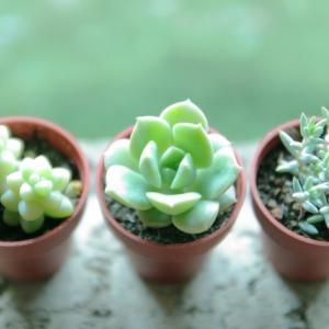 適した環境でなければ植物が育たないように、人間だって適した環境が必要