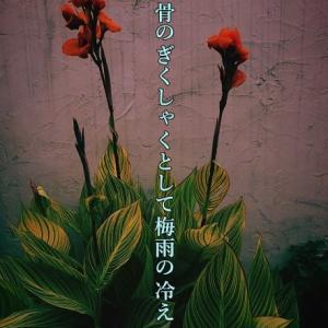 銀座フォト句会・第10回ネットフォト句会参加作品