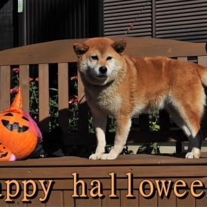 happy halloween (*^-^*)