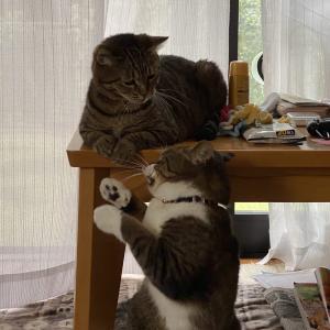 そんなとこで何してるのよ〜〜