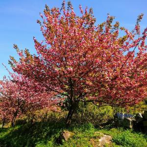 【福岡】桜と花と新緑の季節