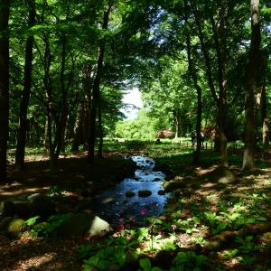 赤城自然園で花散歩