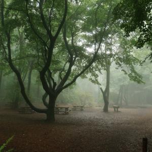 梅雨の赤城自然園は魅惑的