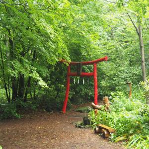 赤城自然園と覚満淵を雨散歩☔ 2020.07.11