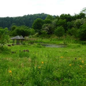 【雪国植物園】2021.06.13