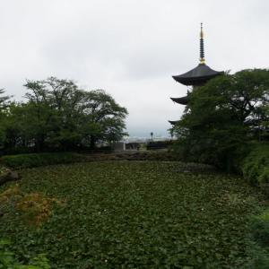 大雄院の睡蓮と松源寺の紫陽花 2021.07.03