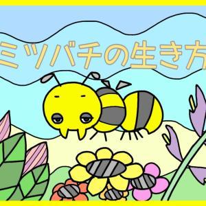 『セイヨウミツバチの生活』/質問形式【ミツバチ目線】