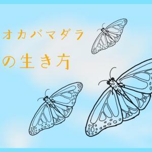 『移動距離5000km!?旅する昆虫オオカバマダラの一生に迫る!』【昆虫物語】 part1