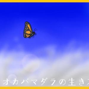 『移動距離5000km!?旅する昆虫オオカバマダラの一生に迫る!』【昆虫物語】part2