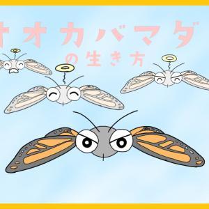 『移動距離5000km!?旅する昆虫オオカバマダラの一生に迫る!』【昆虫物語】part3