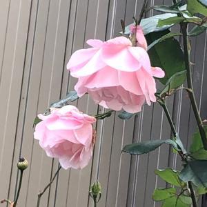 お庭散策4