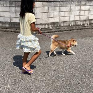 クッキーに散歩に連れて行かれる希ちゃん