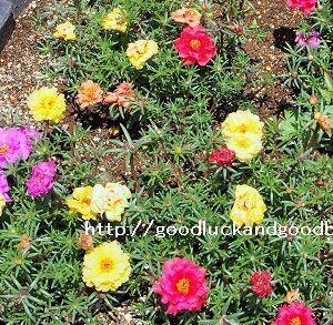 体力を消耗せずに庭の雑草をぬく方法。