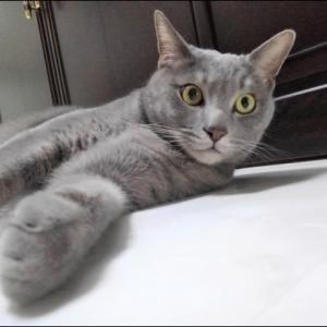 猫と話が出来たらね!‥‥‥‥& 同じ日本人なのに通じない人々