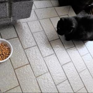 雨の中の猫(ブブ)………& 森友問題の調査は出来るだろうか