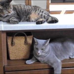 当然のように国会召集が決まりました……& 長閑な猫達