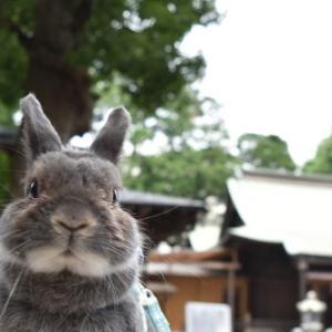 横浜市内 星川杉山神社 うさぎ💕と参拝