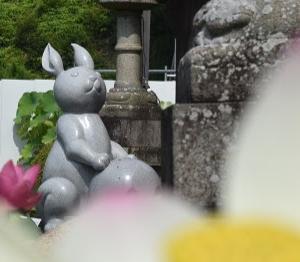 京都 つつじと紫陽花で有名な三室戸寺にも うさぎ参りです。