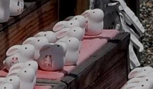 京都 八坂神社 参拝者が少ない祇園さんでも やっぱりうさぎ参りです。