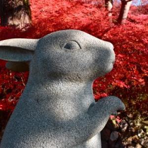 晩秋の京都【4】出雲大神宮 しあわせなでうさぎに会いに行ってきました。(⌒▽⌒)