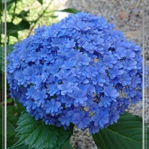 櫻庭* 3th week of June(6月3週目)