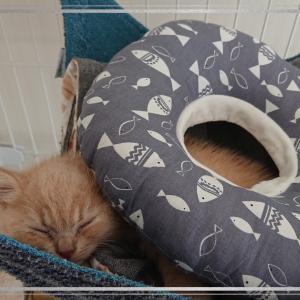 ねこびより*近々の猫たち