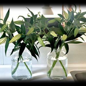 生産者さんからお花をお取り寄せしたよ