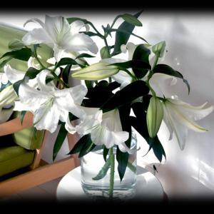 カサブランカの花が咲いたよ