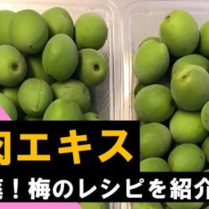 【日常生活】梅の使い方に迷ったら梅肉エキスを作ろう:レシピを公開