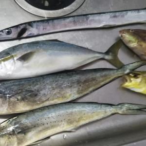 釣った魚を美味しく食べた後の話 / 臭いニオイの元となる生ごみは乾燥処理で一発解決ぅぅぅ!【生ごみ処理機】