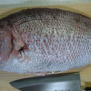 刺身、焼き物、煮つけ・・・鮮度自慢の魅力的な愛南町の魚たちをさまざまな調理方法で食べてみた